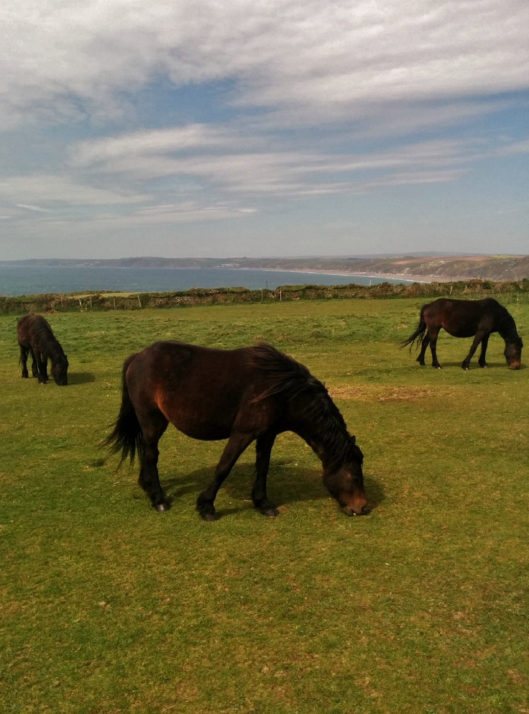 adventures-rame-head-cornwall-horses