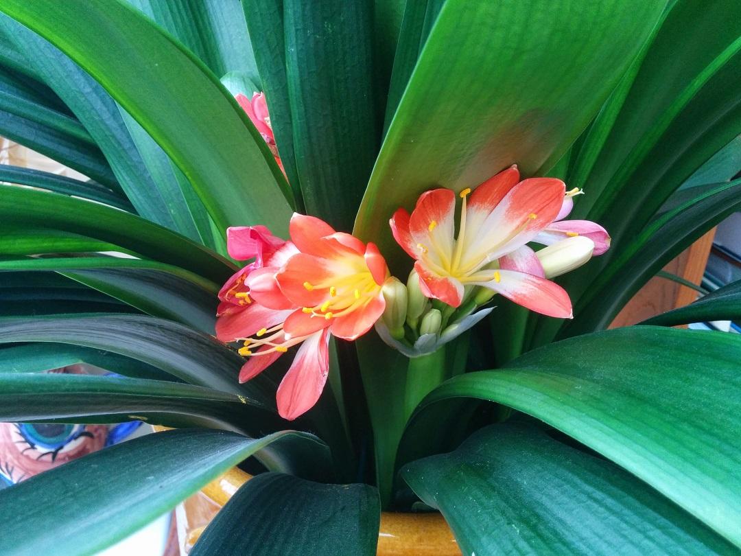 an-eggcellent-easter-flowers