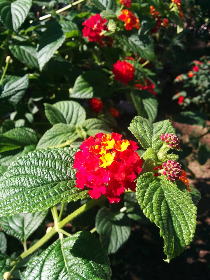 travel-tuesday-sicily-with-sally-flowers-garden