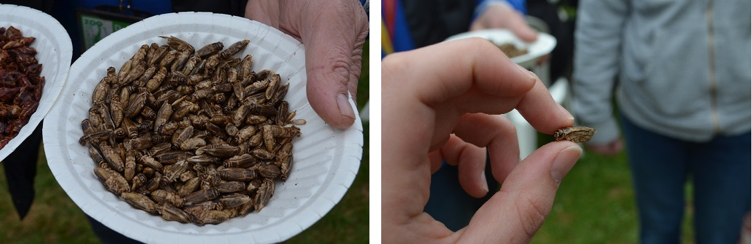 exeter-festival-of-south-west-food-and-drink-bugs-closeup
