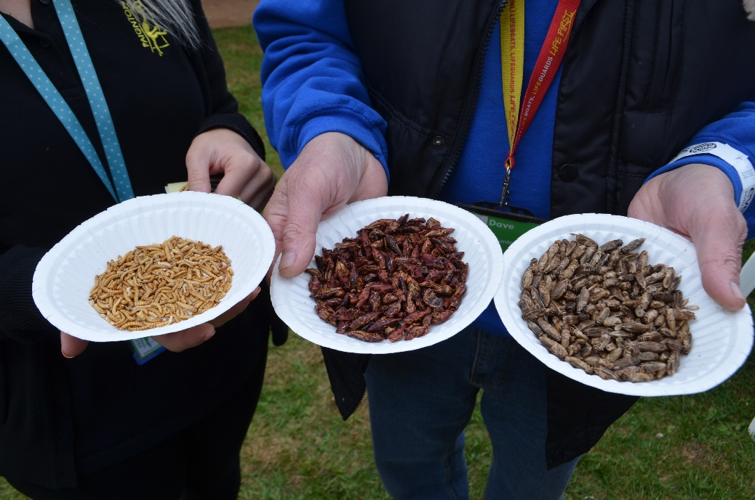 exeter-festival-of-south-west-food-and-drink-bugs