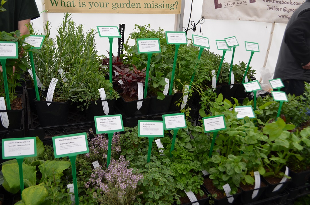 exeter-festival-of-south-west-food-and-drink-plants