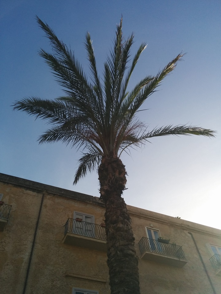 travel-tuesday-sicily-with-sally-palm-tree