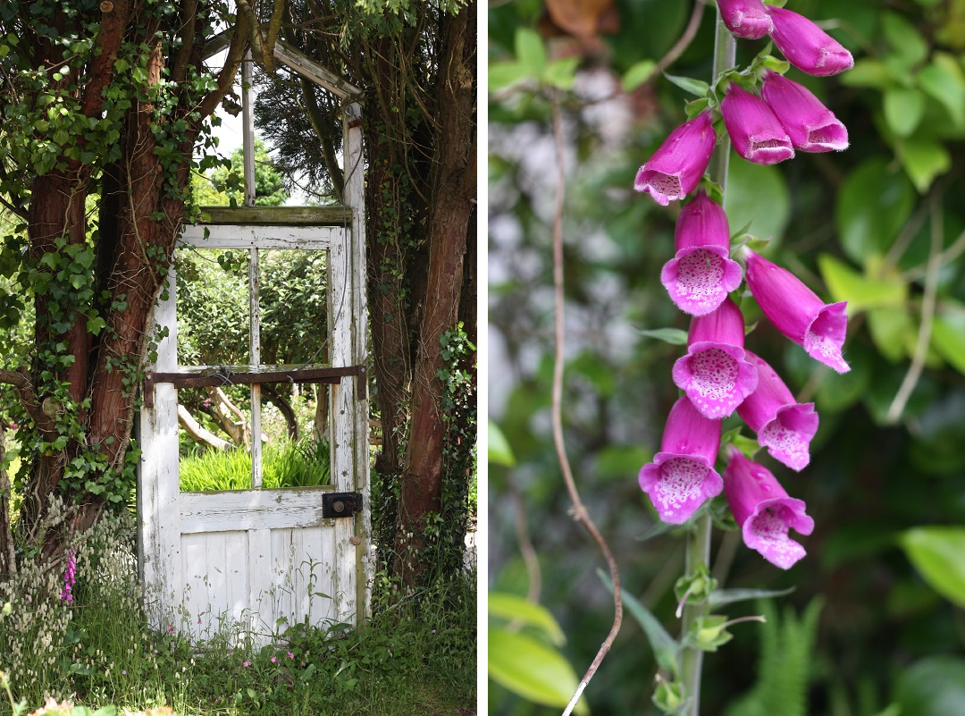 restaurant-review-potager-glasshouse-garden-door-foxglove