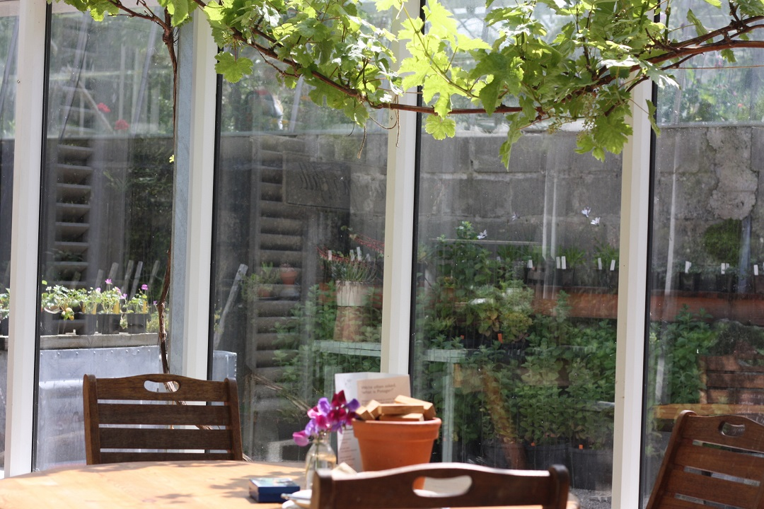restaurant-review-potager-glasshouse-garden-vine