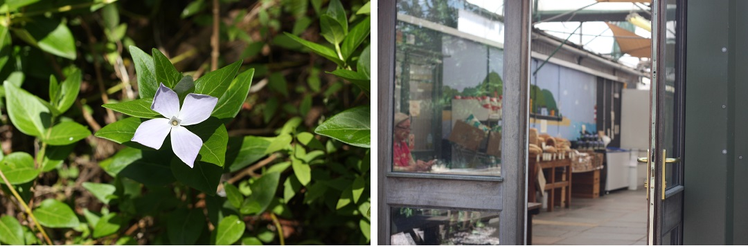riverford-farm-shop-flower-door