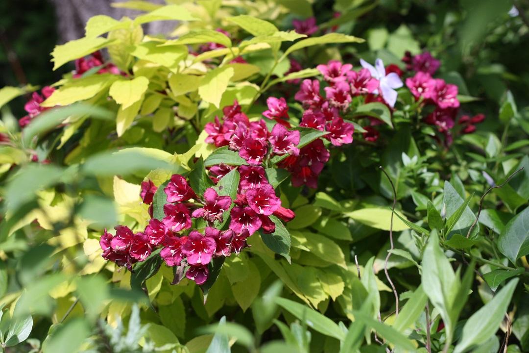 riverford-farm-shop-pink-flowers